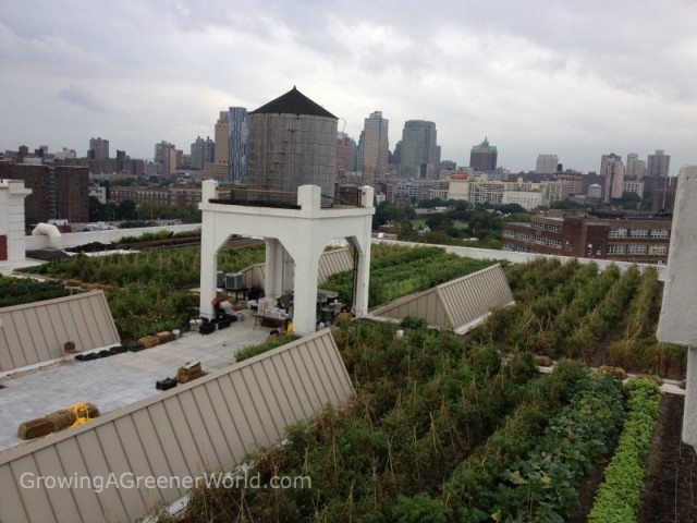 Rooftop Farm in NYC
