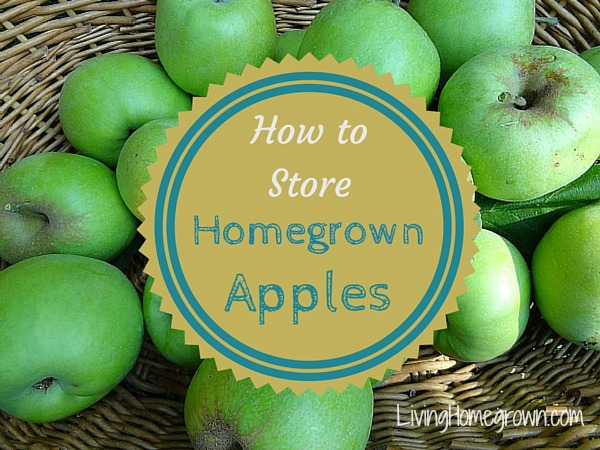 How to store apples - LivingHomegrown.com