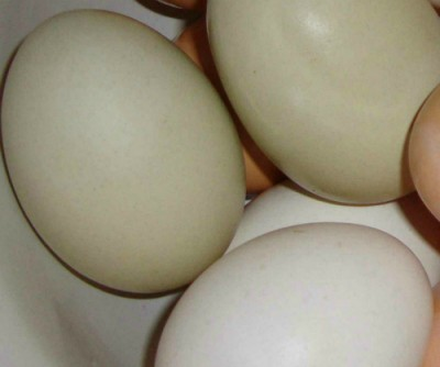 are unrefrigerated eggs safe