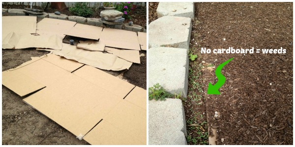 Using cardboard as mulch