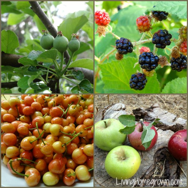 Farm Fruit Collage
