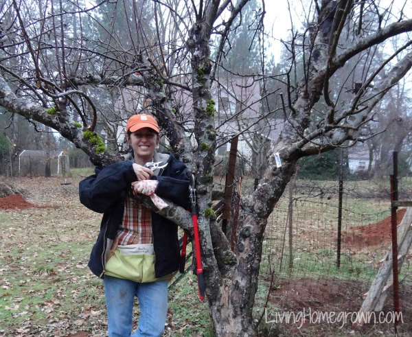 Restoring an heirloom orchard