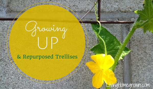 Unusual trellises for gardens - LivingHomegrown.com
