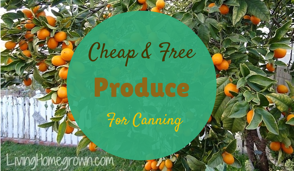 Free Fruit Sources for Canning - LivingHomegrown.com