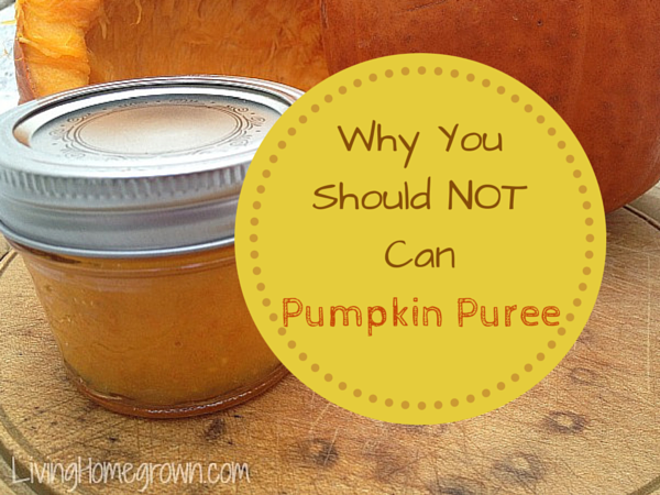 Do Not Can Pumpkin Puree - LivingHomegrown.com
