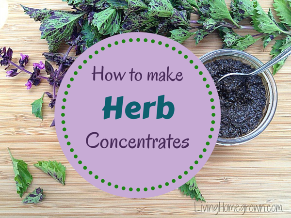How To Make Herb Concentrates - LivingHomegrown.com