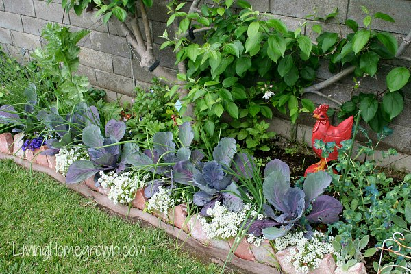 Landscaping With Edibles : Living homegrown