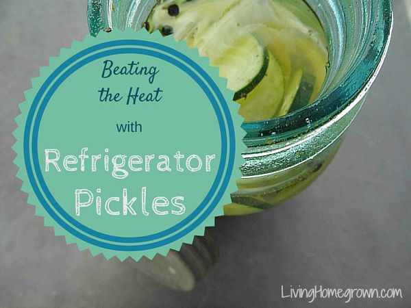 Making Refrigerator Pickles - LivingHomegrown.com