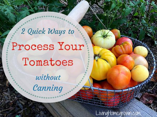 Preserving Tomatoes - LivingHomegrown.com