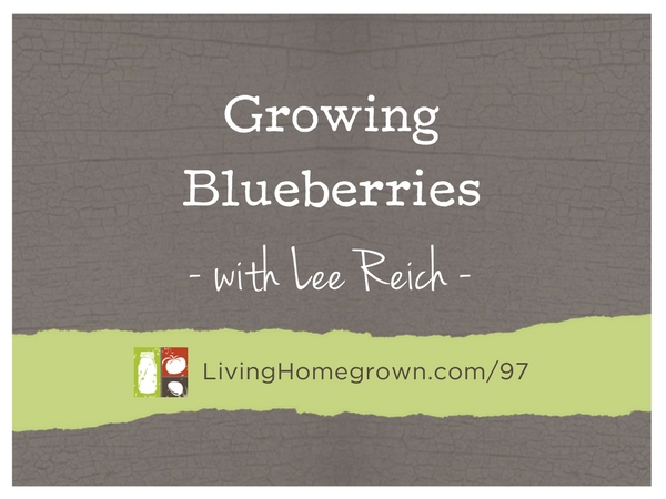 Growing Blueberries with Lee Reich at LivingHomegrown.com