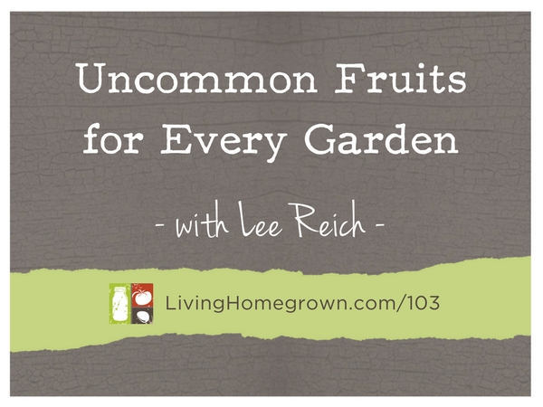 Uncommon Fruits for Every Garden with Dr. Lee Reich at LivingHomegrown.com