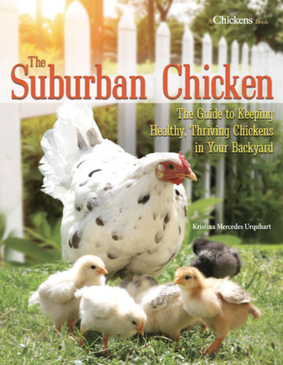 The Suburban Chicken by Kristina Urquhart on LivingHomegrown.com