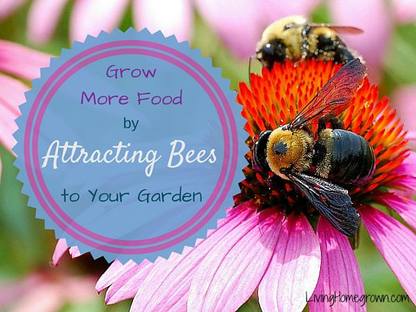 5 Tips for Creating a Bee-Friendly Food Garden - LivingHomegrown.com