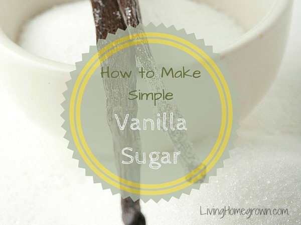 Making Vanilla Sugar - LivingHomegrown.com